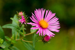 Color de la abeja Foto de archivo