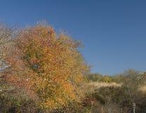 Color de la caída Imagen de archivo