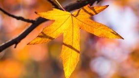 Color de la caída Fotografía de archivo libre de regalías