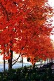 Color de la caída Imagenes de archivo