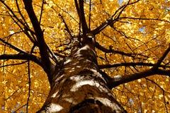 Color de la caída Foto de archivo libre de regalías