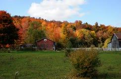 Color de la caída en el país Imagenes de archivo