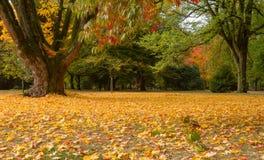 Color de la caída en el parque fotos de archivo