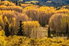 Color de la caída en la mota con cresta Colorado Imagenes de archivo