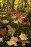 Color de la caída en suelo del bosque fotos de archivo