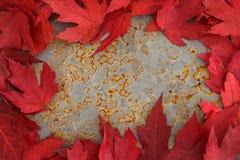 Color de la caída - hojas del rojo Fotografía de archivo libre de regalías