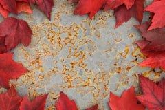 Color de la caída - hojas del rojo Fotografía de archivo