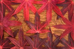 Color de la caída - hojas del rojo Imagen de archivo