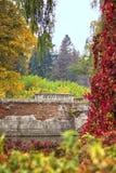 Color de la naturaleza Fotografía de archivo libre de regalías