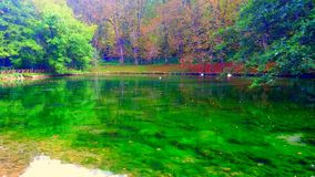 Color de la naturaleza Foto de archivo libre de regalías