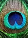 Color de la pluma del pavo real Imágenes de archivo libres de regalías
