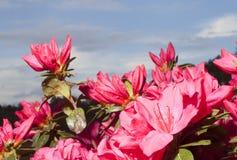 Color de la primavera Imágenes de archivo libres de regalías
