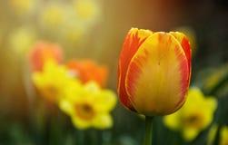 Color de la primavera Imagen de archivo libre de regalías