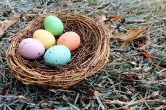 Color de la primavera de huevos manchados Imágenes de archivo libres de regalías