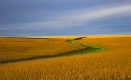 Color de la soja Fotos de archivo