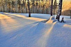 Color de oro de la tarde del invierno en el bosque en la puesta del sol Imagenes de archivo