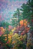 Color de Ozark Imagen de archivo