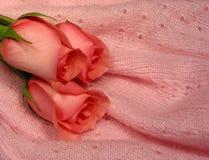 Color de rosa de bebé imagen de archivo