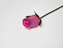 Color de rosa en colores pastel Rose de madera aislada en blanco Foto de archivo
