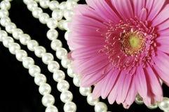 Color de rosa y perlas Fotografía de archivo libre de regalías