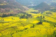Color del amarillo de la mostaza de campo Fotos de archivo libres de regalías