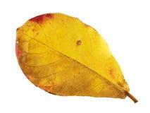 Color del cambio de las hojas Imagen de archivo libre de regalías