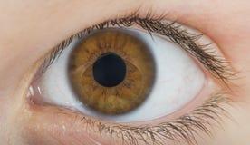 Color del marrón del ojo humano Imágenes de archivo libres de regalías