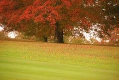 Color del otoño imágenes de archivo libres de regalías