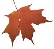 Color del otoño fotos de archivo