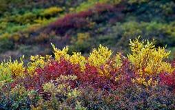 Color del otoño Foto de archivo libre de regalías