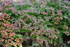 Color del otoño, jardín Foto de archivo