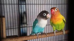Color del pájaro fotografía de archivo