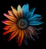 Color dentro Fotos de archivo