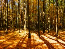 Color detail photography of autumnal beech forest in sunset Stock Photo