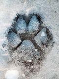 Macro photography of cat paw print in snow. Color detail photography of one cat paw print on ice Stock Photos