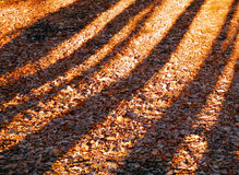 Color detail photography of trees shadows Royalty Free Stock Photo