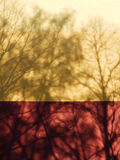 Color detail photography of trees shadows on the wall Royalty Free Stock Images