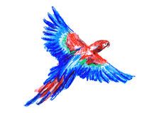 Color drawing macaw. Hand drawing of macaw. Vector illustration Royalty Free Stock Photography