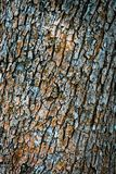 Color of dried up tree bark Royalty Free Stock Photo
