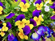 Color dual Imagen de archivo libre de regalías