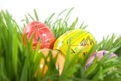 Color easter eggs in grass Stock Image