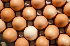 Color eggs Stock Images