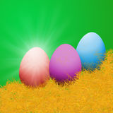 The color eggs on yellow grass with sun light Stock Image
