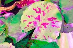 Color en colores pastel de la flor de loto del vintage al modelo y a la textura creativos Foto de archivo libre de regalías