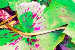 Color en colores pastel de la flor de loto del vintage al modelo y a la textura creativos Imágenes de archivo libres de regalías