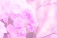 color en colores pastel de la orquídea suave para el fondo Fotos de archivo