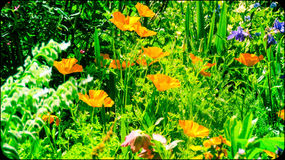 Color en vida Foto de archivo libre de regalías