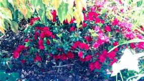 Color en vida Fotos de archivo