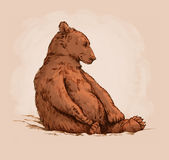 Color engrave isolated grizzly bear Royalty Free Stock Images