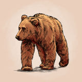 Color engrave isolated grizzly bear Stock Photography